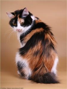 Serafim Karmino Cat