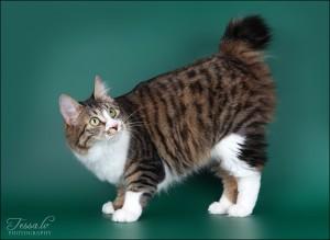 Zerika Karmino Cat