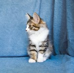 Zerika Karmino Cat 2 m/o 1