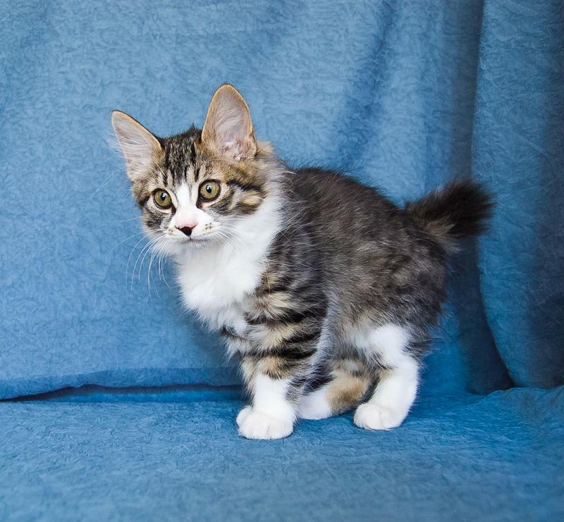 Zerika Karmino Cat 2 m/o 10