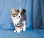 Zerika Karmino Cat 2 m/o 16