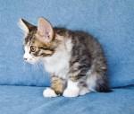 Zerika Karmino Cat 2 m/o 4