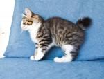 Zerika Karmino Cat 2 m/o 9