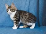 Zerika Karmino Cat 2 m/o 2