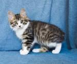 Zerika Karmino Cat 2 m/o 3