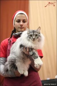Gusar Karmino Cat