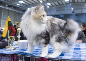 Grioza Karmino Cat