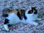 Serafima Karmino Cat